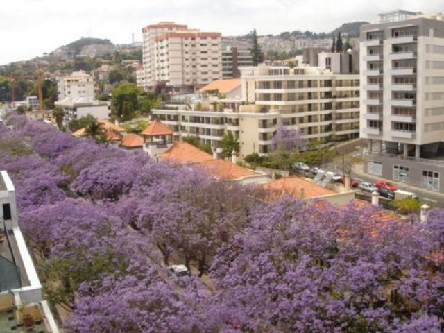 Location Appartement Vacances FUNCHAL (10)