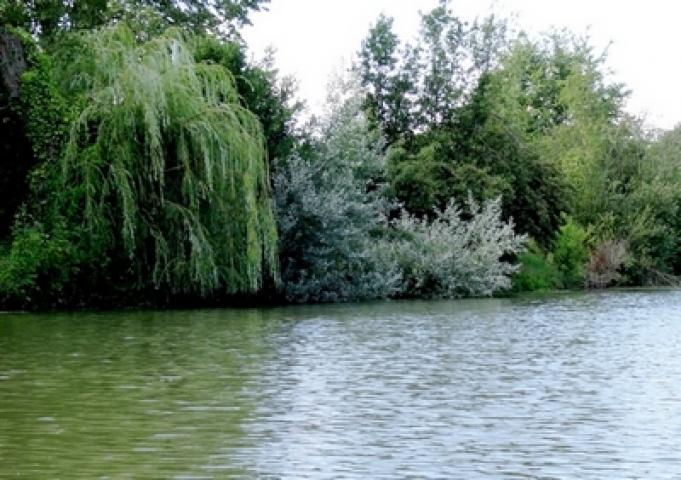 Location Maison Vacances LA TAILLÉE (10)